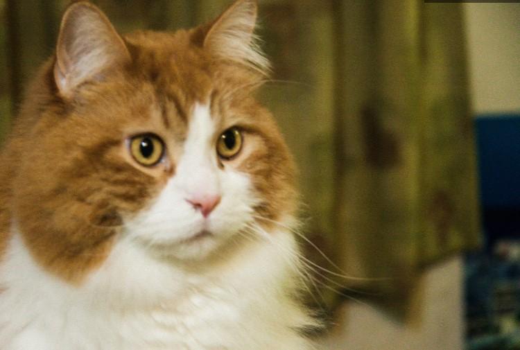 管理職になりたくない人を呆然と見つめる猫